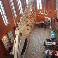 meeresmuseum-wasserwachtjugend-rostock-12