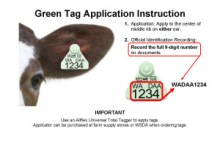 GreenTagApplicationInstruction