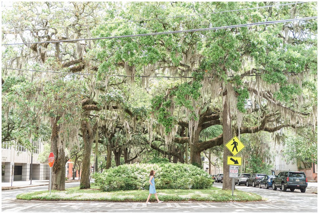 oak moss trees savannah ga