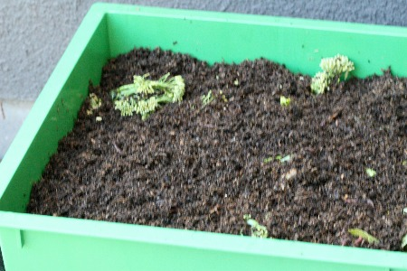 Image shows what vermicomposting is.