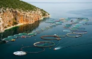 Image shows a fish farm.