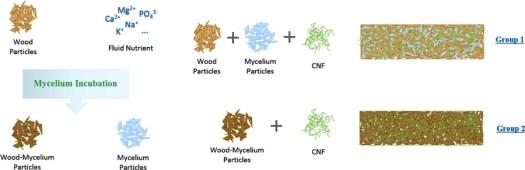 Mycelium wood