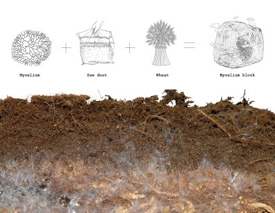 grow it yourself Mycelium