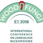 Wood Fungi / Mycelium