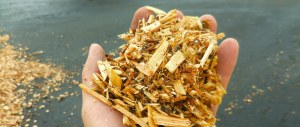 Woody biomass could become clean energy source