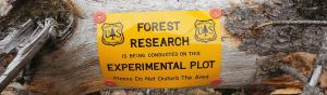 Researcher examines biochar use in forest