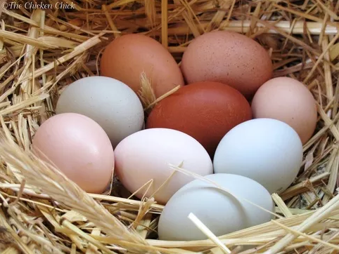 Different Egg Shell
