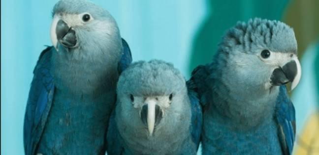 8 طيور انقرضت خلال العقد الحالي