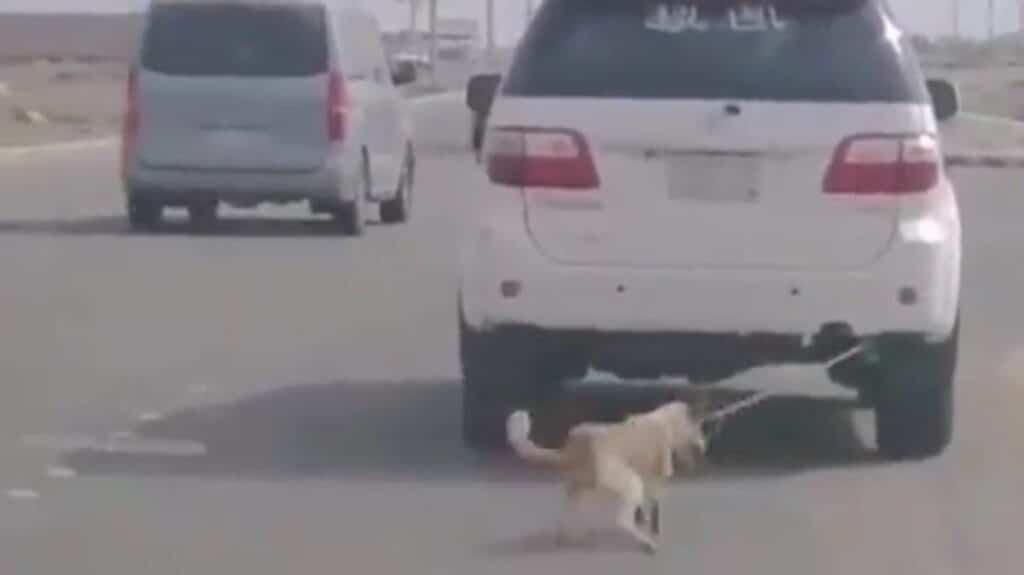 تعذيب سعودي لكلب