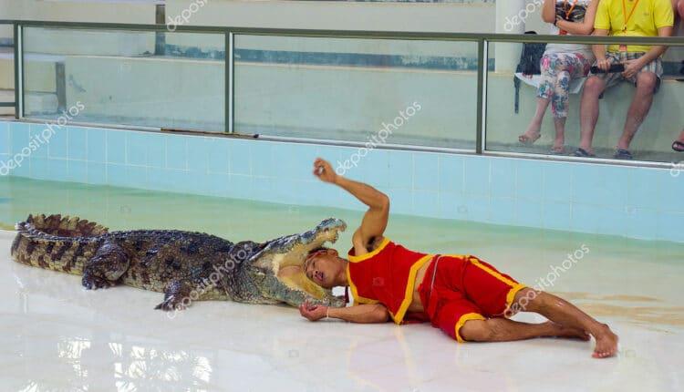 تمساح يُطبق فكّيه على شاب ويتجوّل به في مياه النهر