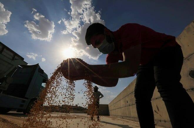 تخزين القمح