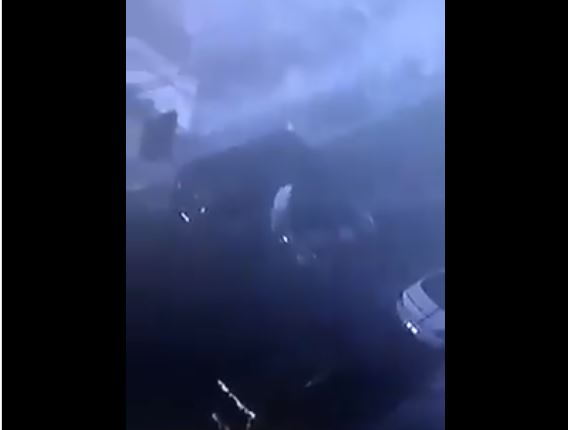 اربد-سرقة لصوص سيارات الأردن