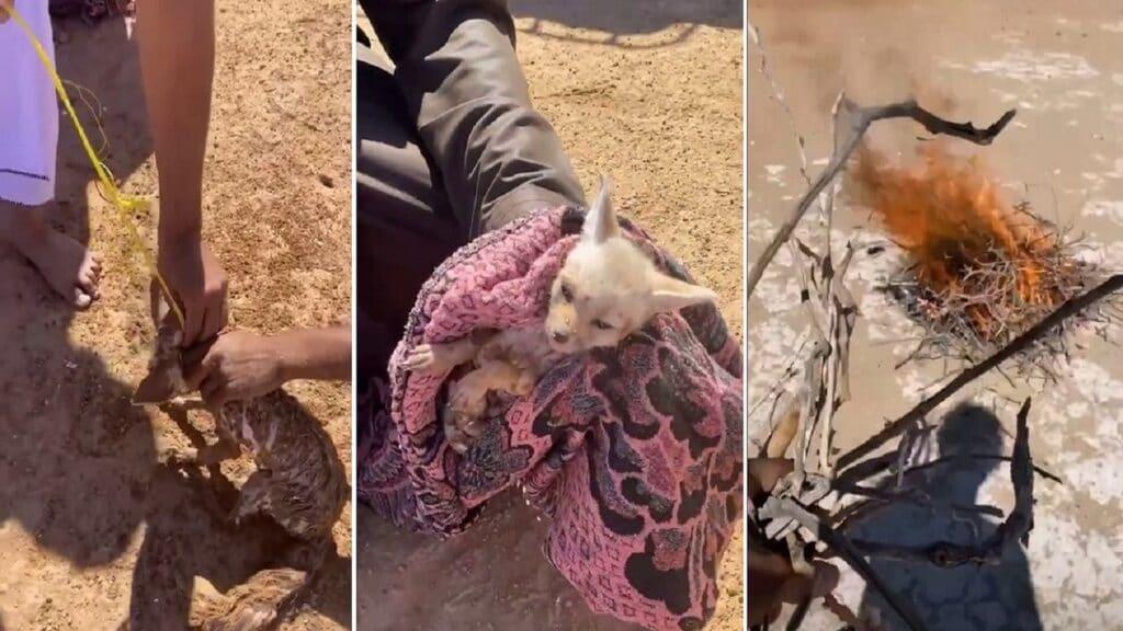 """""""المشاكس"""" يثير ضجة واسعة في سلطنة عمان بعدما ظهر وهو يعذب ثعلباً ويحرق أعشاش الطيور"""