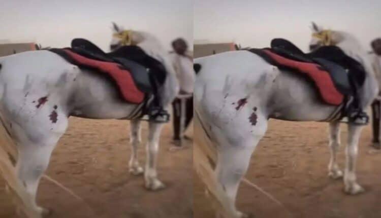 تعذيب خيل في السعودية