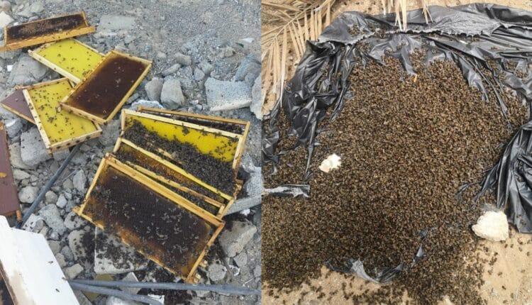 موت النحل في سلطنة عمان بسبب ارتفاع درجات الحرارة