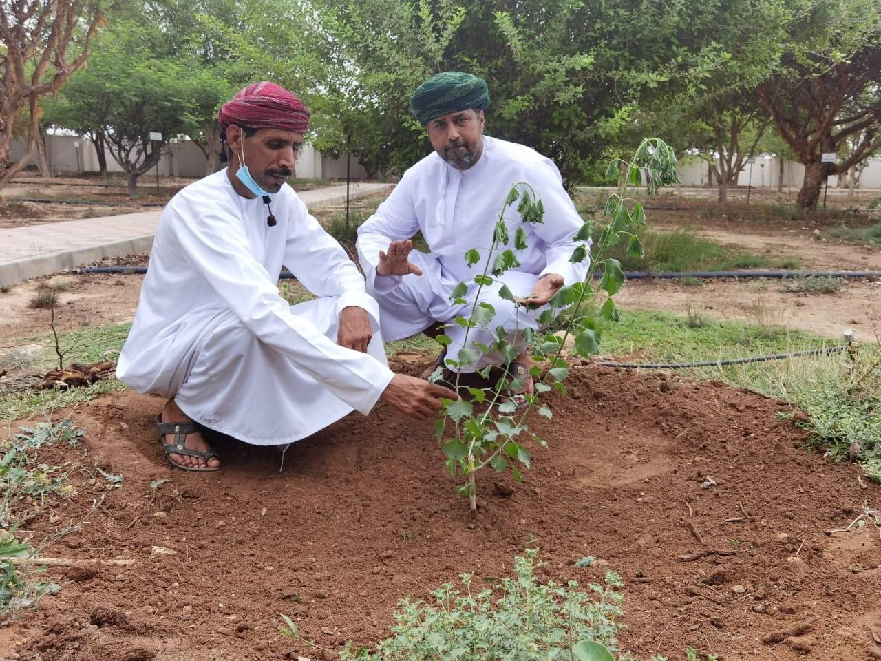 سلطنة عمان تكتشف شجرة فريدة من نوعها تظهر لأول مرة بالوطن العربي (شاهد)