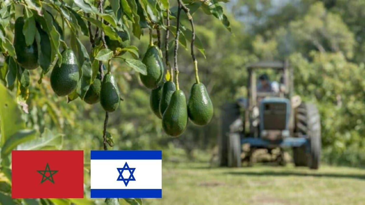 التطبيع مع إسرائيل وصل إلى الافوكادو
