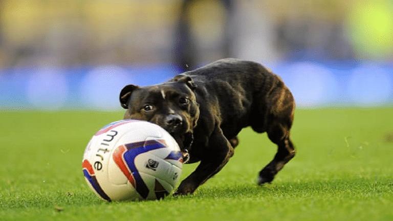 لطة طريفة لكلب يسدد هدفاً من ركلة حرة مباشرة في مباراة كرة قدم