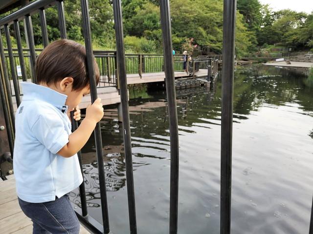 岸根公園 篠原池