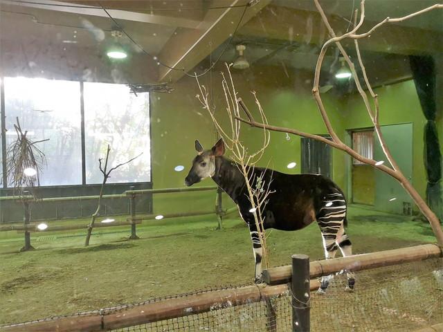 ズーラシア 子連れにお勧め!とにかく広い横浜の動物園