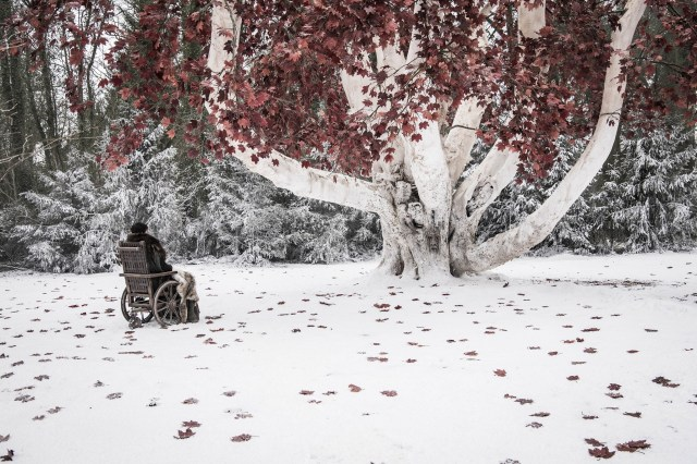 Bran has a talk with his weirwood tree friend. Photo: Helen Sloan / HBO