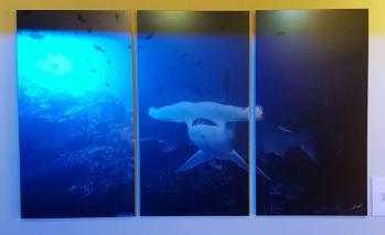Oris-Tiburones-6