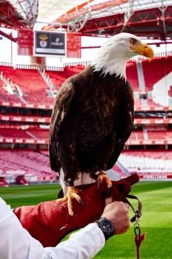 HUBLOT-Benfica-11