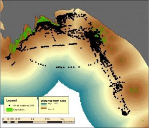 Figure 1. All the whale locations marked in Port Orford study region during 2015. The green spots are kelp beds, and the background color indicates increasing distance from kelp.