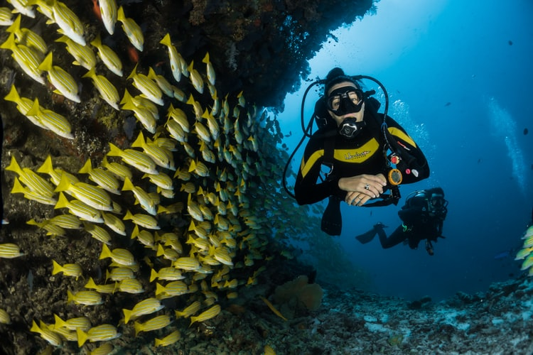 Underwater photo of scuba diver swimming with a school of fish