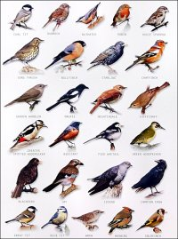 1000+ images about BIRDS LIST NAMES on Pinterest | Garden ...