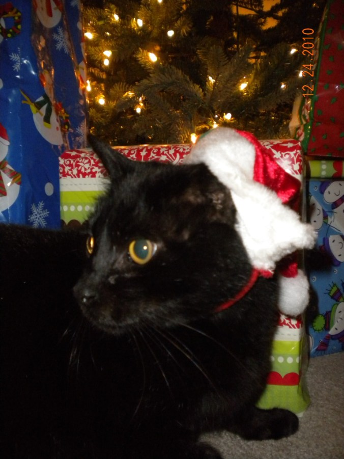 Christmas black kitty