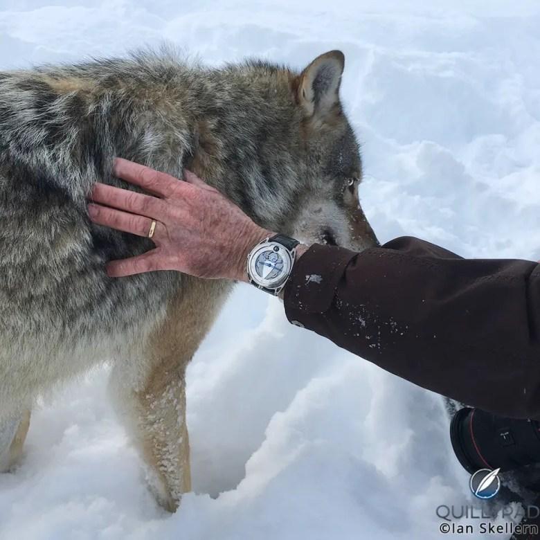 De Bethune Wolf 1144