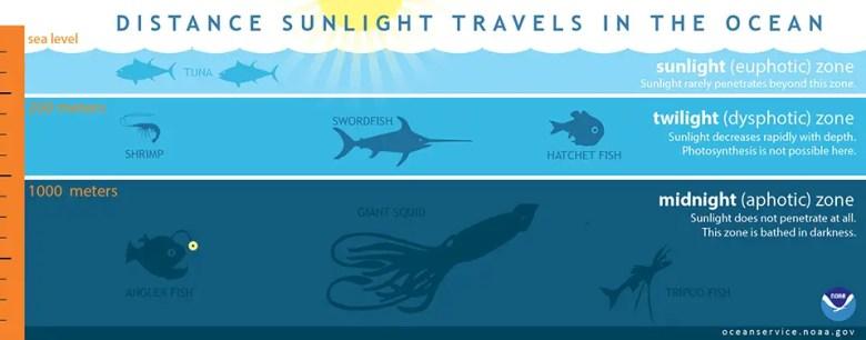 Lightinocean