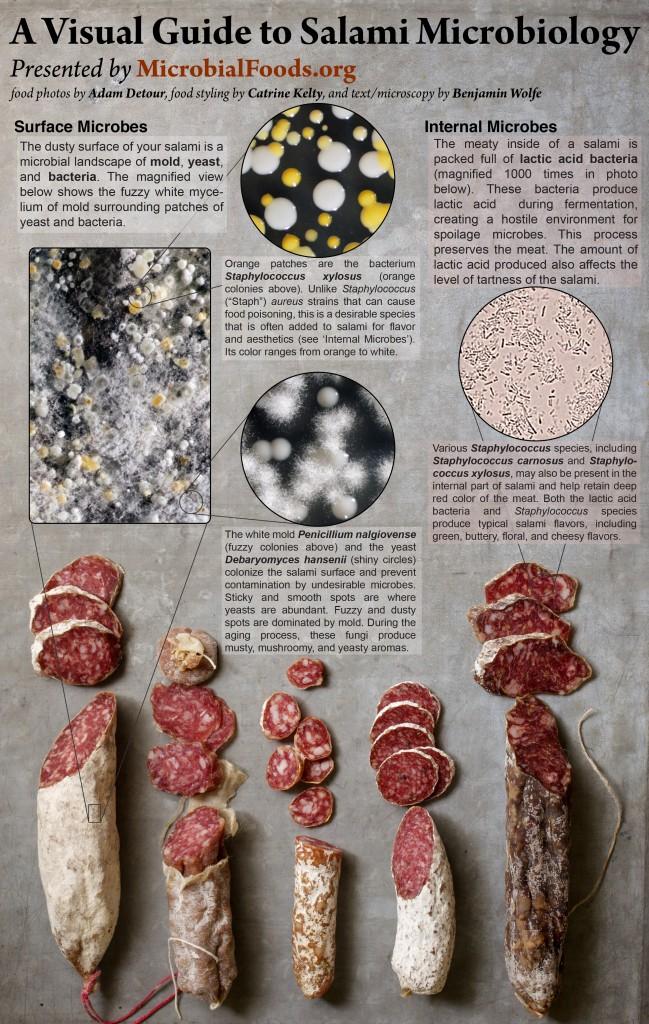 Ken uw microbe