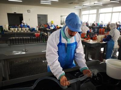 Meneer Wateetons bezoekt een Chinese darmenfabriek