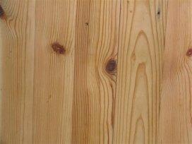 kayu pinus