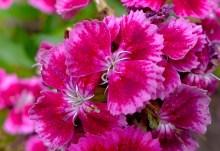Kew flower pattern P1050708