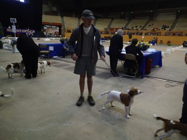 kooiker Zane at the dog show
