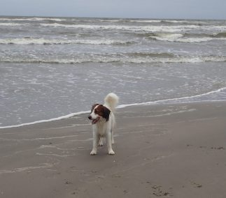Astro at Galveston Beach