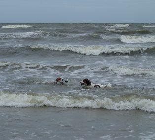 Astro and Finn swimming