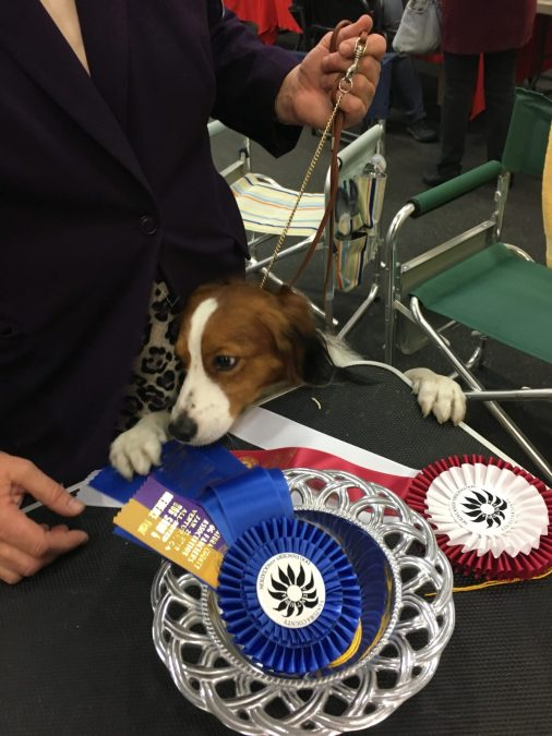 Harvey makes history again: Reserve Best in Show at Ventura County Dog Fanciers Association!