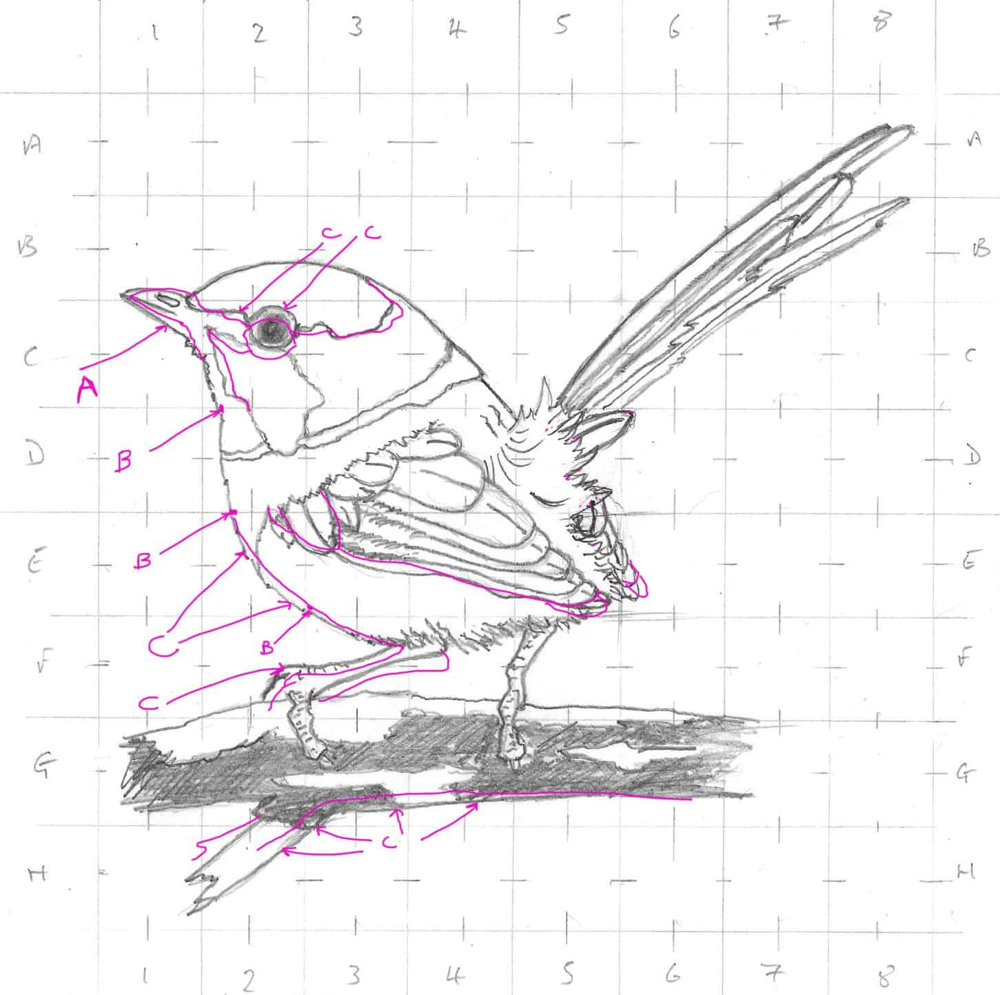 Drawing Buzzy Bees and a Little Blue Wren using the Grid