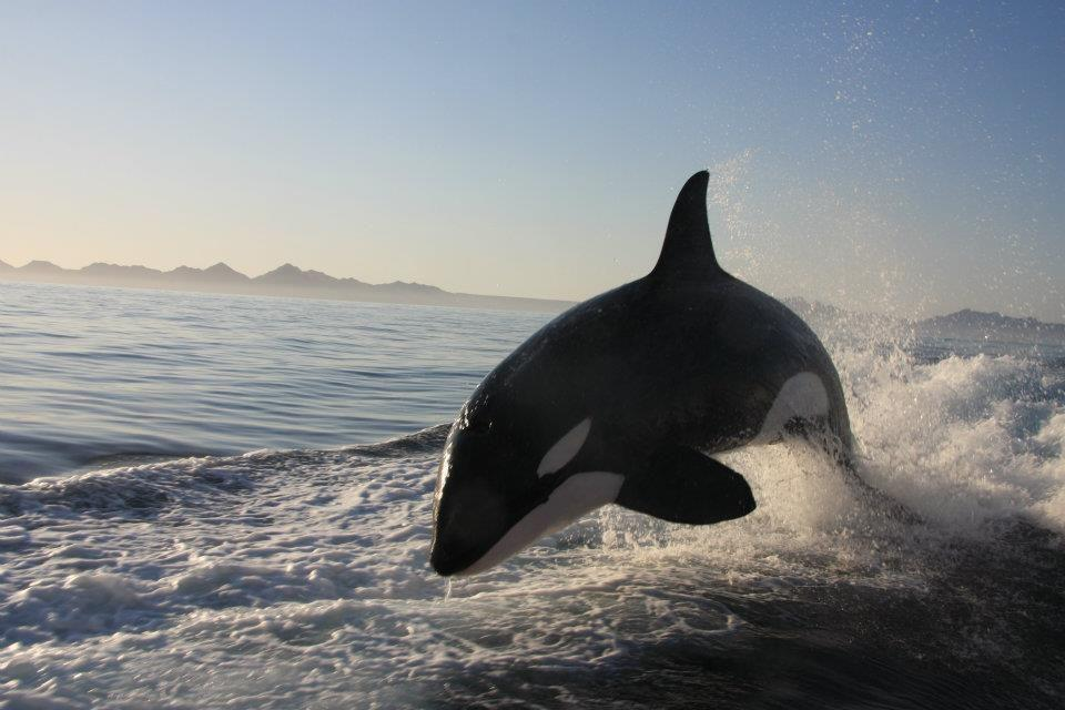 Video Jet Ski Fishing Show Followed By Killer Whales
