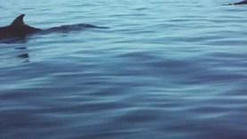 seadoo et baleine