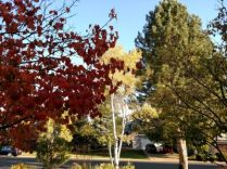 Wateford foliage 2015 400