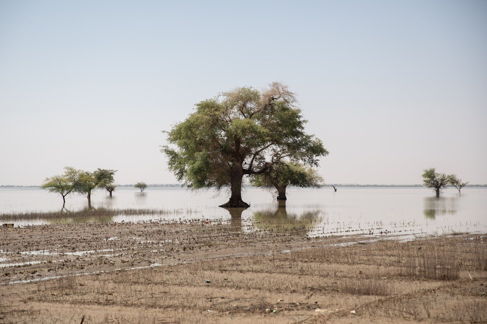 South Sudan's plans for conservation, as the country feels the impact of climate change