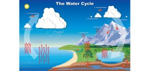 Water Cycle | Colorado Water Knowledge | Colorado State