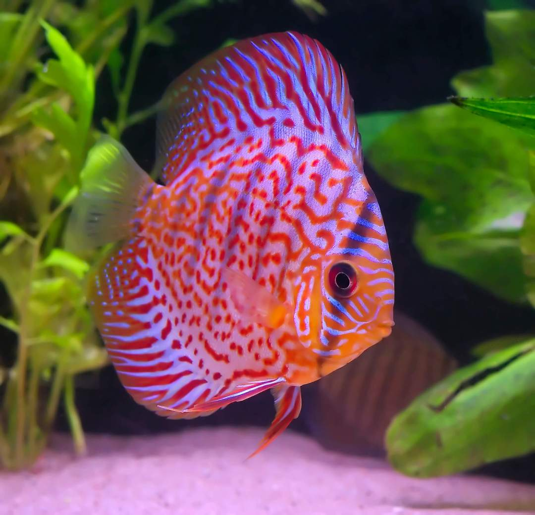 Tropical Fish Tank Melbourne | CALL 1300 MY FISH