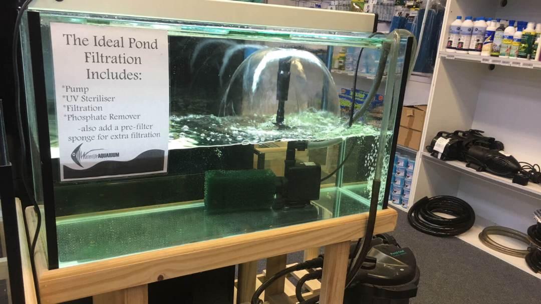 Pond Pumpin Aquarium-1600x900