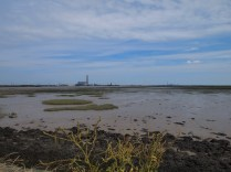 The mud at low tide